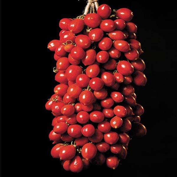 Pomodoro del piennolo
